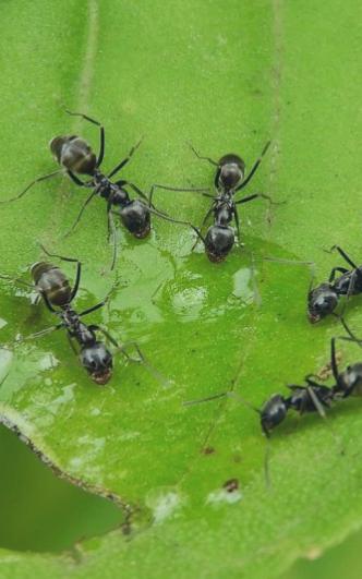 Hyönteiset (Ryömivät)