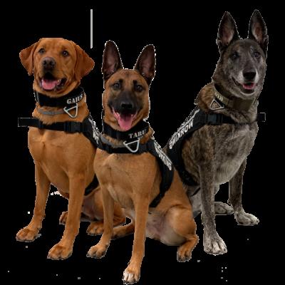 doges-pest1-pages